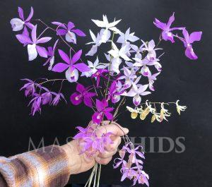 Barkeria bouquet IMG_4207